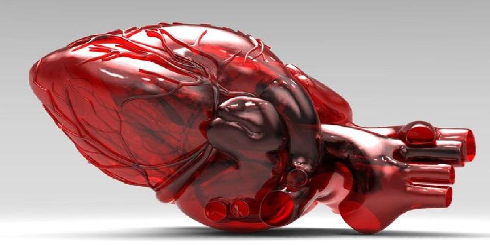 پرینت ۳ بعدی مدل قلب انسان