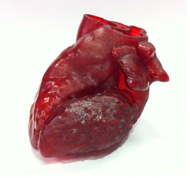 چاپ سه بعدی مدل قلب انسان