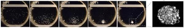 پرینتر های سه بعدی زیستی