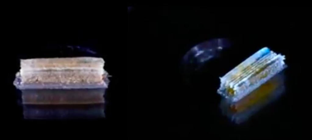 پرینت سه بعدی وسیله ای برای درمان آسیب نخاعی