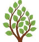 شاخه های کاربردی