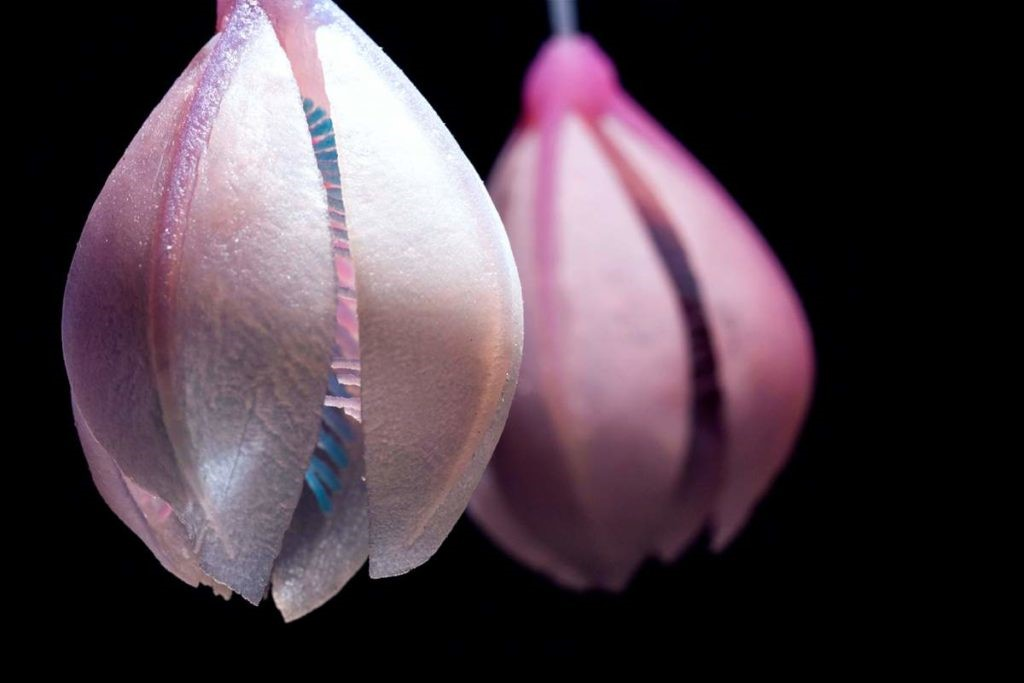پرینت سه بعدی یک ارگانیسم مصنوعی زنده