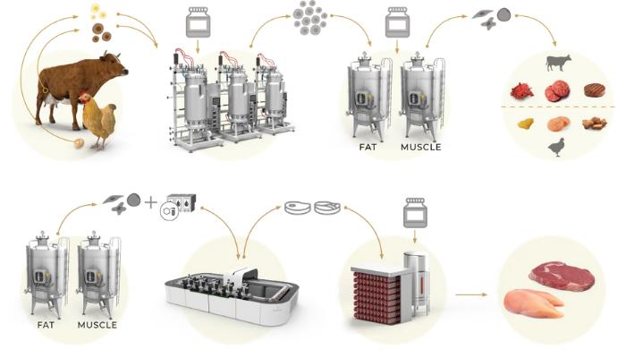 توسعه گوشت با استفاده از یک روش جدید پرینت سه بعدی زیستی