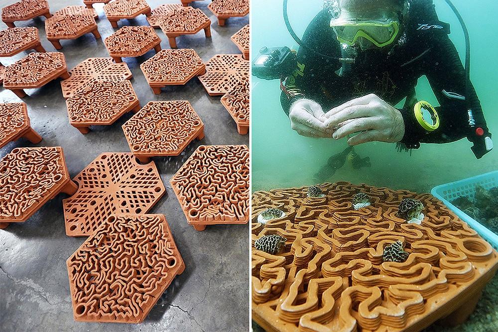 مرمت صخره های مرجانی در پارک دریایی Hoi Ha Wan با پرینت سه بعدی