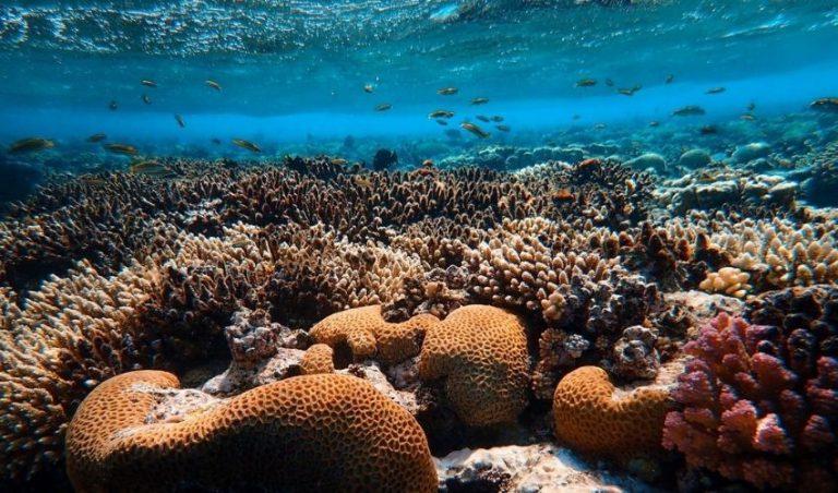 پرینت سه بعدی کاشی های سفالی جهت مرمت صخره های مرجانی